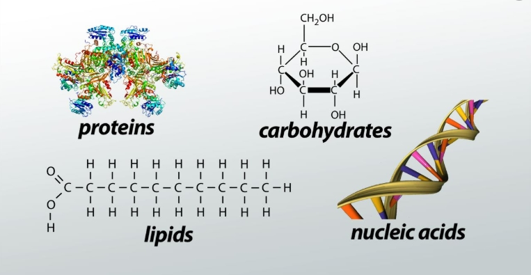 Different Types of Molecules Which are explained with Examples