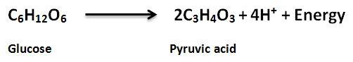 respiration formula 2