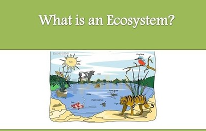What Is Ecosystem And Its Importance In Biology?