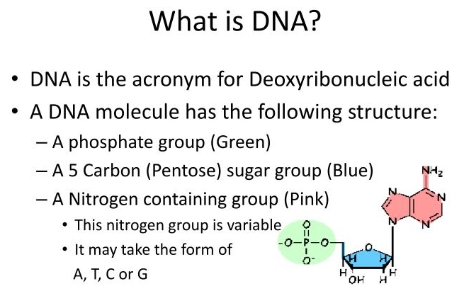 DNA: What is the shape of DNA Describe Its Purpose?