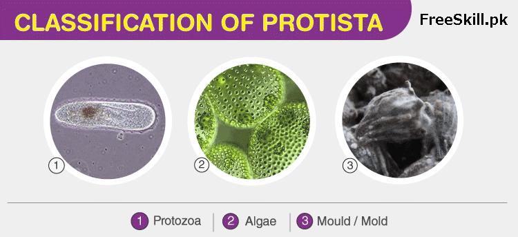 Classification of Protista