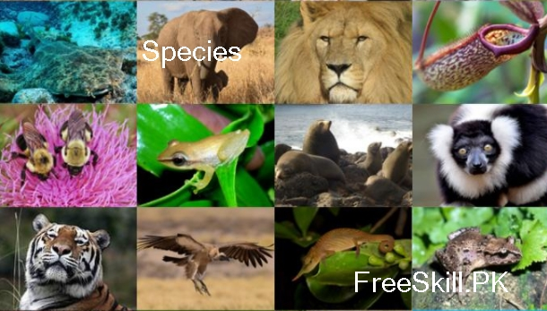 Species: Describe Its Types, & Examples