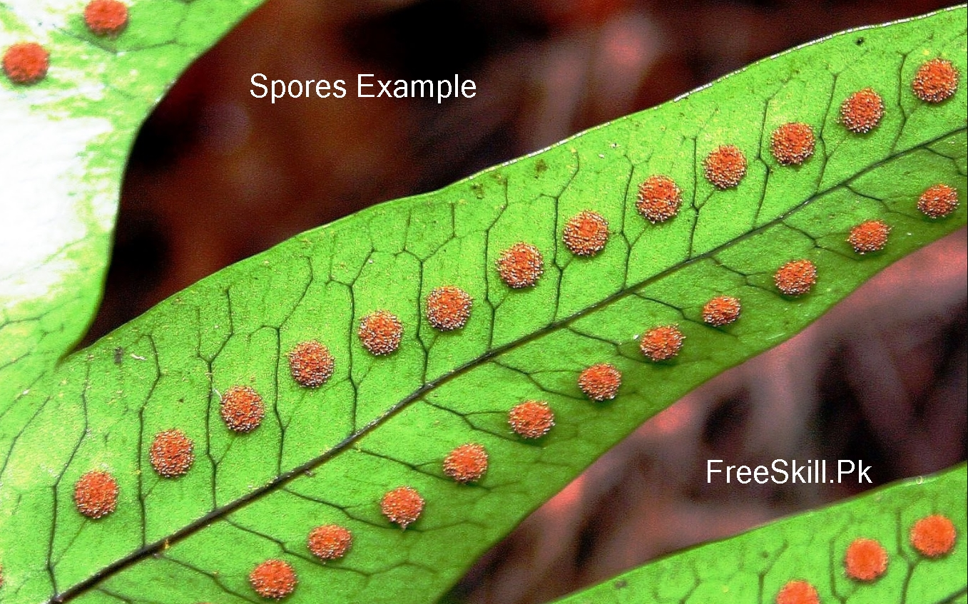 What Are Spores? Definition, Types, & Examples