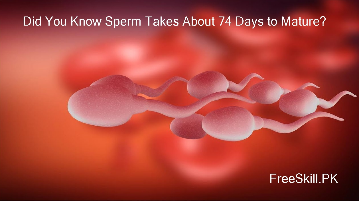 Sperm Life Cycle